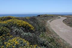 Rastro del Wildflower y del océano Fotos de archivo
