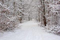 Rastro después de la nieve fresca fotografía de archivo libre de regalías