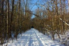 Rastro el caminar/del esquí en invierno Foto de archivo