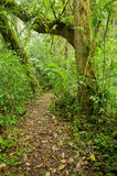 Rastro en bosque Imagenes de archivo