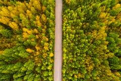 rastro en bosque colorido del otoño Fotos de archivo