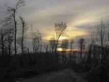 Rastro en el bosque Imagen de archivo libre de regalías