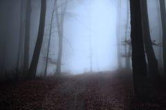 Rastro en el bosque Fotos de archivo