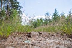 Rastro en el bosque Fotos de archivo libres de regalías