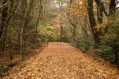 Rastro en el bosque Imagenes de archivo