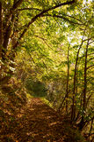 Rastro en el bosque en otoño Foto de archivo libre de regalías
