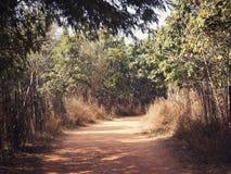 Rastro en el parque de la biodiversidad de Aravali de Delhi fotografía de archivo