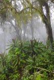 Rastro en la selva Imagen de archivo