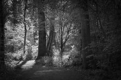 Rastro en las maderas Imagenes de archivo