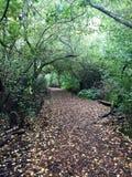 Rastro en medio de Forest Canopy Fotografía de archivo libre de regalías