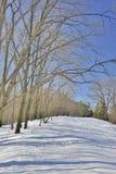 Rastro en parque del invierno Fotografía de archivo