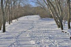 Rastro en parque del invierno Imagen de archivo libre de regalías