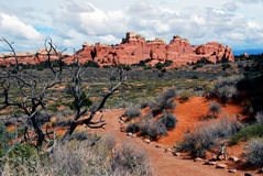 Rastro escénico del desierto Fotografía de archivo libre de regalías