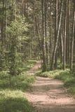 Rastro escénico en el bosque, estilo del vintage, Letonia, nordic fotos de archivo libres de regalías