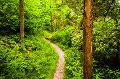 Rastro estrecho a través de un bosque enorme en el parque de estado de Codorus, Pennsy Imagen de archivo