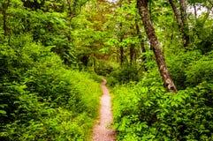 Rastro estrecho a través de un bosque enorme en el parque de estado de Codorus, Pennsy Foto de archivo libre de regalías