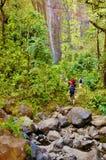 Rastro exótico del parque de estado del haleakala de Maui Foto de archivo