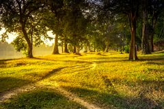 Rastro hermoso del bosque del paisaje del verano Imagen de archivo