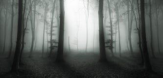 Rastro hermoso en bosque brumoso Fotografía de archivo