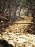 Rastro mágico de la bobina que pasa a través de bosque encantado Foto de archivo