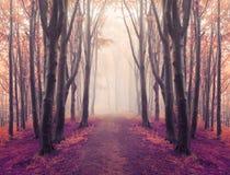 Rastro mágico de la simetría en bosque de niebla del cuento de hadas foto de archivo