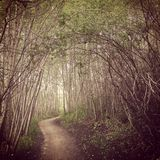 Rastro místico del bosque Fotografía de archivo libre de regalías