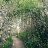 Rastro místico del bosque Fotos de archivo
