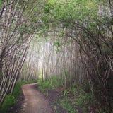 Rastro místico del bosque Fotos de archivo libres de regalías