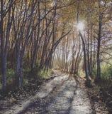 Rastro pacífico del bosque Fotografía de archivo libre de regalías