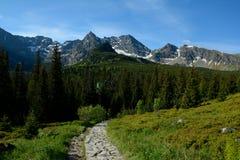 Rastro, picos y árboles en el valle de Gasienicowa Foto de archivo