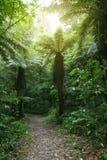 Rastro que camina en bosque Fotos de archivo