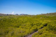 Rastro que camina en el bosque del mangle en Pranburi Forest Park, Prachuap Khiri Khan, Tailandia Fotos de archivo