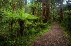 Rastro que camina en Nueva Zelanda Fotos de archivo