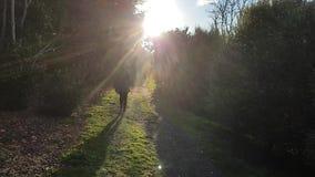 Rastro que camina joven hacia el sol metrajes