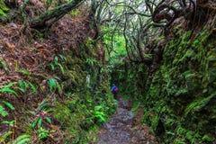 Rastro que camina a lo largo de los levadas en las montañas de Madeira, Por Fotografía de archivo libre de regalías