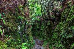 Rastro que camina a lo largo de los levadas en las montañas de Madeira, Por Imagen de archivo libre de regalías