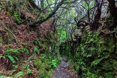 Rastro que camina a lo largo de los levadas en las montañas de Madeira, Por Fotos de archivo