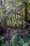 Rastro que lleva a la cruz conmemorativa en el bosque fotografía de archivo libre de regalías