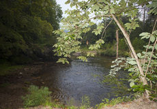 Rastro que pasa por alto a Wilson Creek Fotografía de archivo libre de regalías