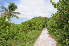 Rastro rodeado por los árboles de las uvas del mar en Bahia Honda State Park imágenes de archivo libres de regalías