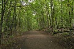Rastro sombreado en el bosque Fotos de archivo