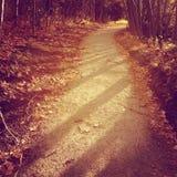 Rastro tranquilo del bosque de la puesta del sol del otoño Imágenes de archivo libres de regalías
