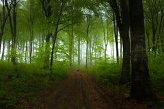 Rastro tranquilo en bosque de niebla Imágenes de archivo libres de regalías