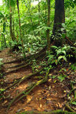 Rastro a través de la selva tropical Foto de archivo