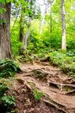Rastro a través de un bosque Foto de archivo libre de regalías