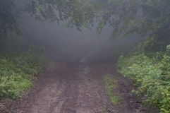Rastro a través de un bosque en niebla Fotografía de archivo libre de regalías