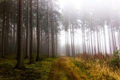 Rastro a través de un bosque misterioso en niebla Fotografía de archivo libre de regalías