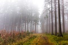 Rastro a través de un bosque misterioso en niebla Imagen de archivo libre de regalías