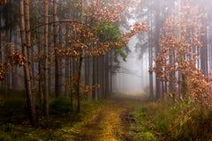 Rastro a través de un bosque misterioso en niebla Fotos de archivo