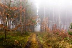 Rastro a través de un bosque misterioso en niebla Fotografía de archivo